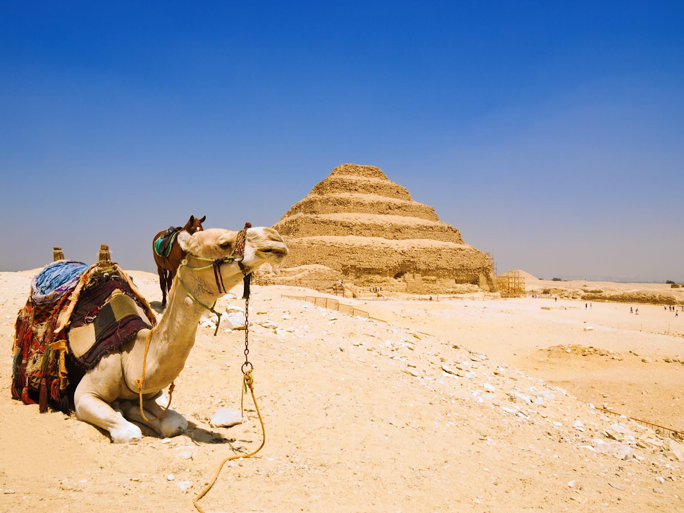un camello frente a la pirámide escalonada Djoser antes de su restauración