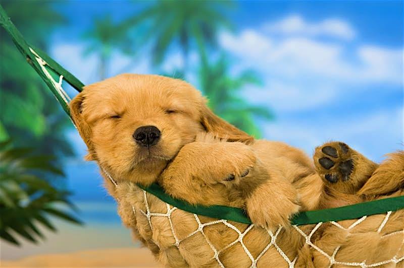 A cute dog sleeping in a hammock
