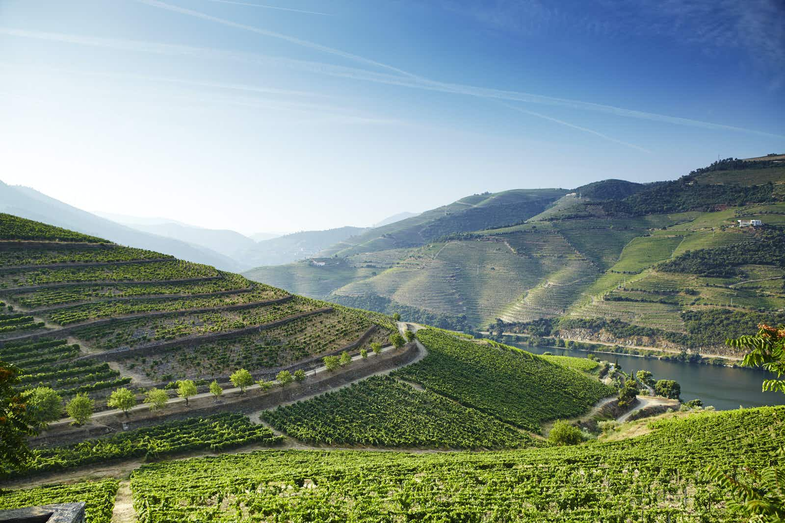 The Douro Valley is stunning to look at, but taking in vineyard tours add to its flavour © Matt Munro / Lonely Planet