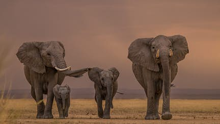 Safari animals: the story of elephants (and the best places to see them)