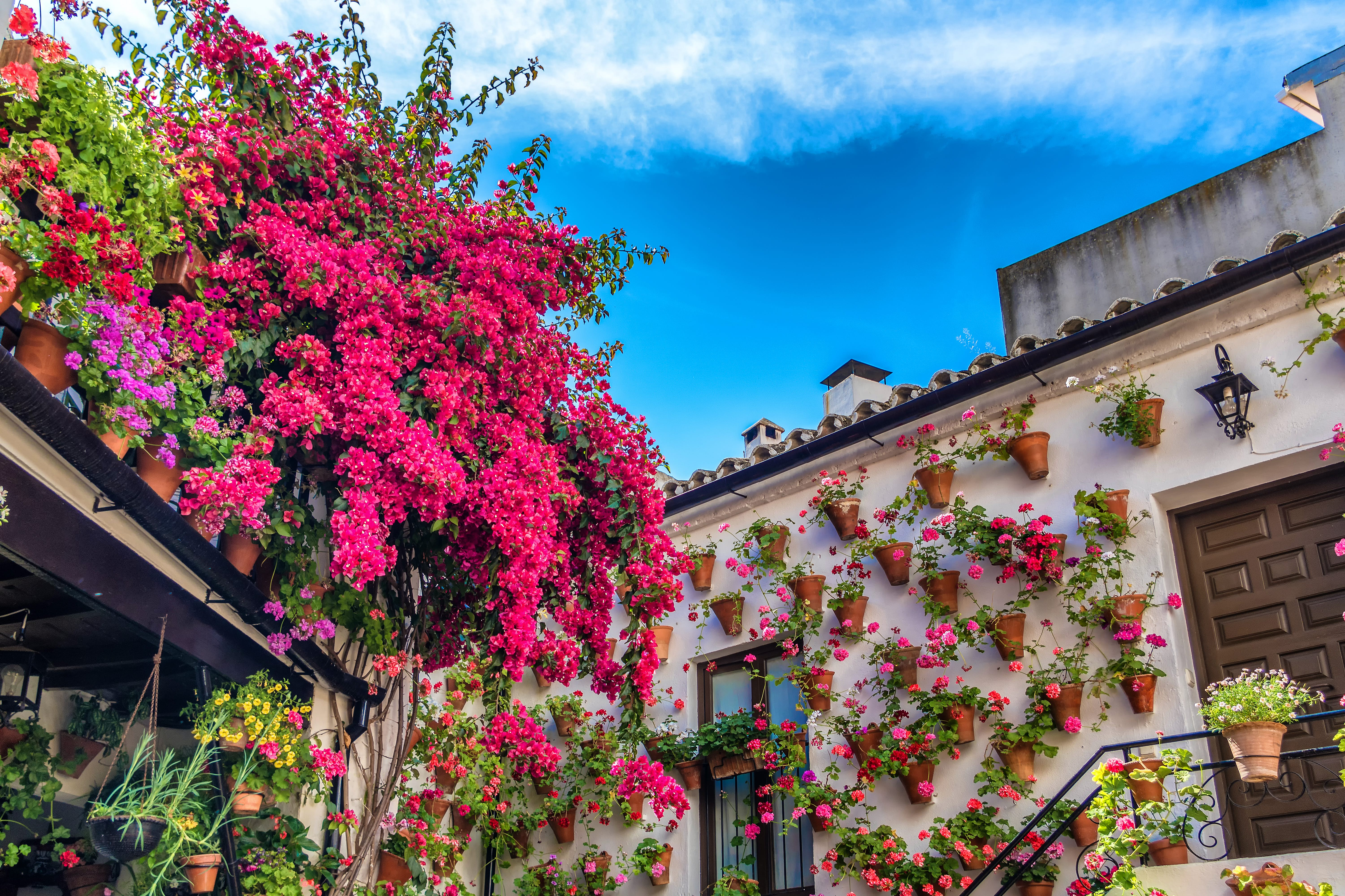 Geraniums and bougainvillea hang on the side of a home during the Festival of the Patios, Spain. The sun is shining and the flowers are in bloom.