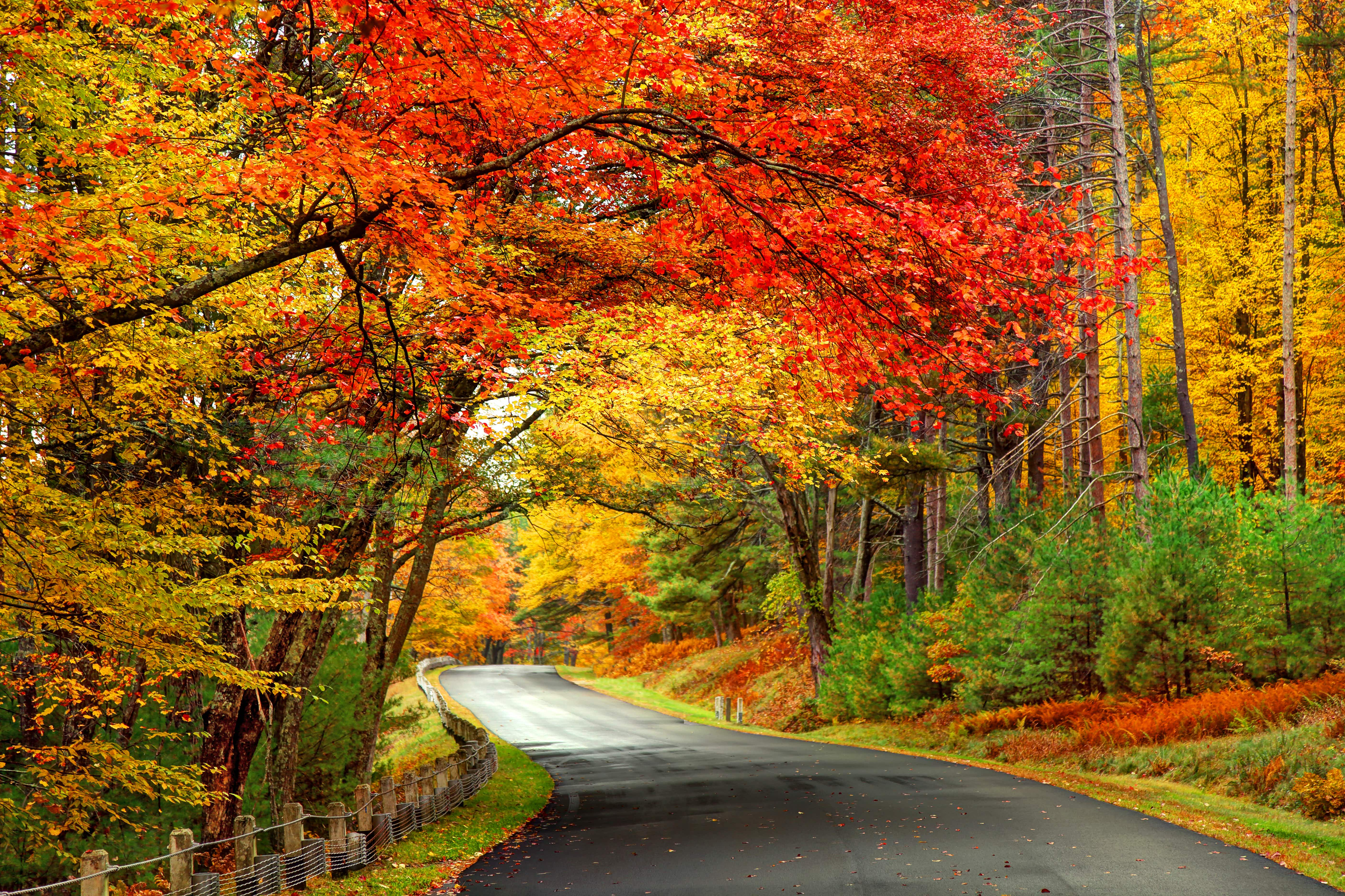 Peak Fall Foliage 2020 New York.The Ultimate New England Fall Foliage Road Trip Lonely Planet