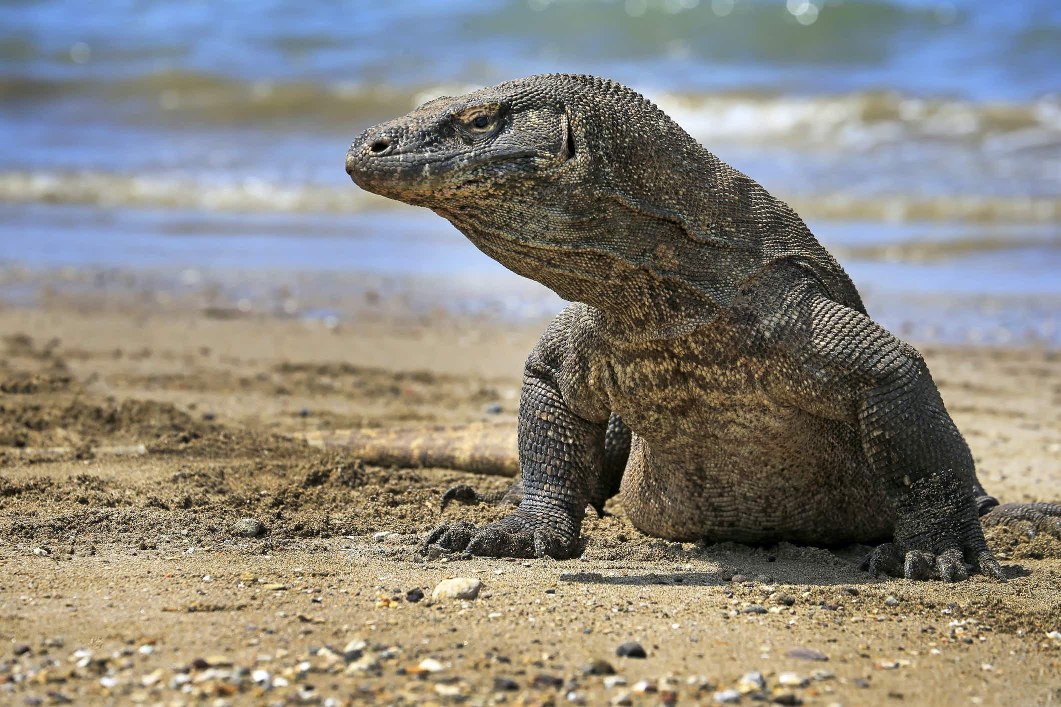 Visitors to Komodo Island may have to pay an annual membership fee ©jeffysurianto via Getty