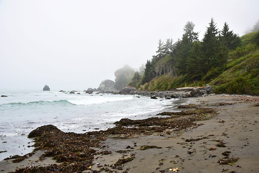 A light blue-grey Pacific Ocean meets the curve of the shoreline in Redwood Forest National Park, where the sand is dark grey and brownish red seaweed clumps on the left side of the frame. In the background, deep green headlands meet the beach, with stands of pine and spruce shrouded in a light fog. Large seastacks and boulders appear far in the background. SCUBA diving national parks