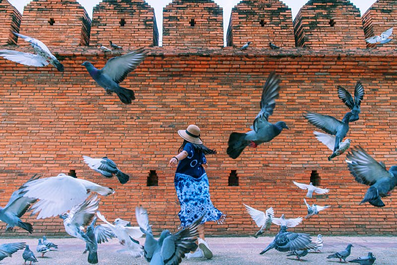 Tourists are paying for the services of 'pigeon spookers' in Thailand