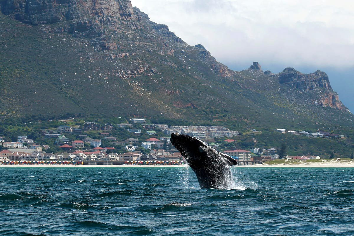 Why are whales and sharks disappearing from Cape Town's coast?