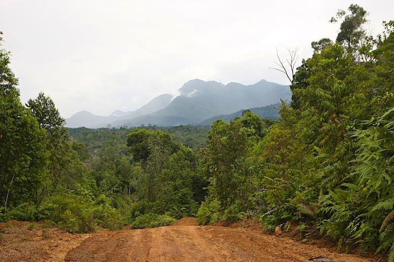 Indonesia to build a new capital city in Borneo jungle
