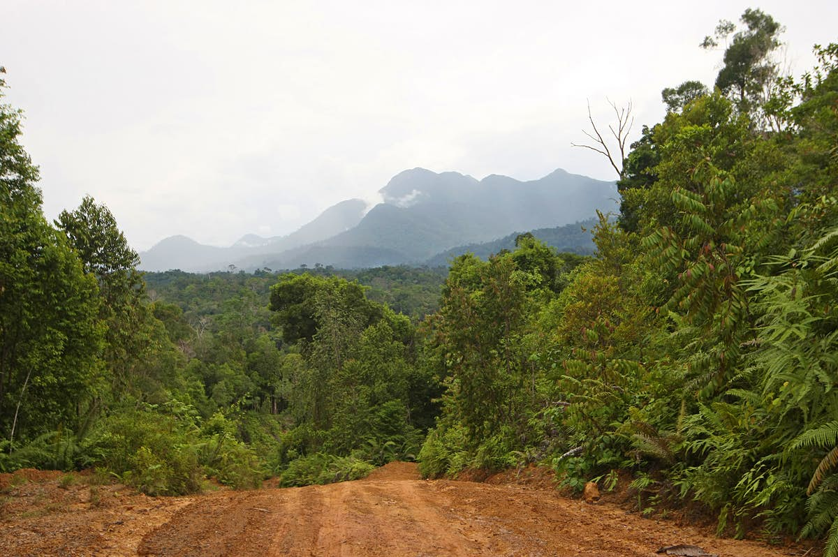 Indonesia to build a new capital city in Borneo jungle