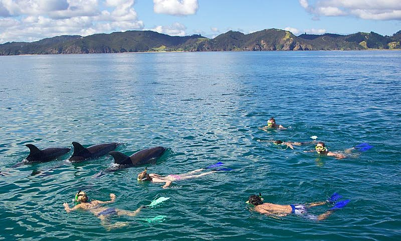 Bottlenose dolphins and tourists in NZ