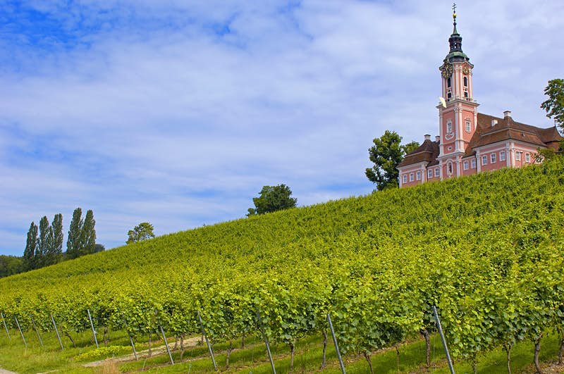 A bright pink monastery in Birnau with white baroque details and a green copper roof and gold clock on the tower and orangy red mansard roof on the two wings flanking the tower overlooks bright green vineyards