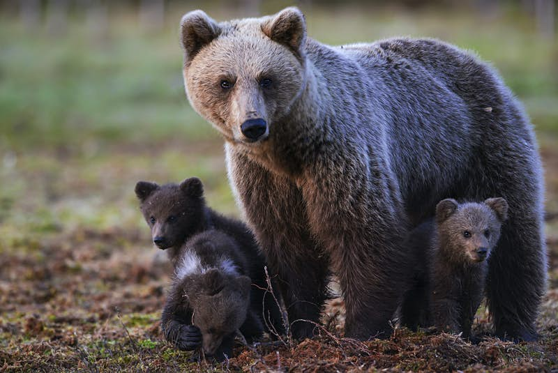 Finland has been named the best country to visit for wildlife travel