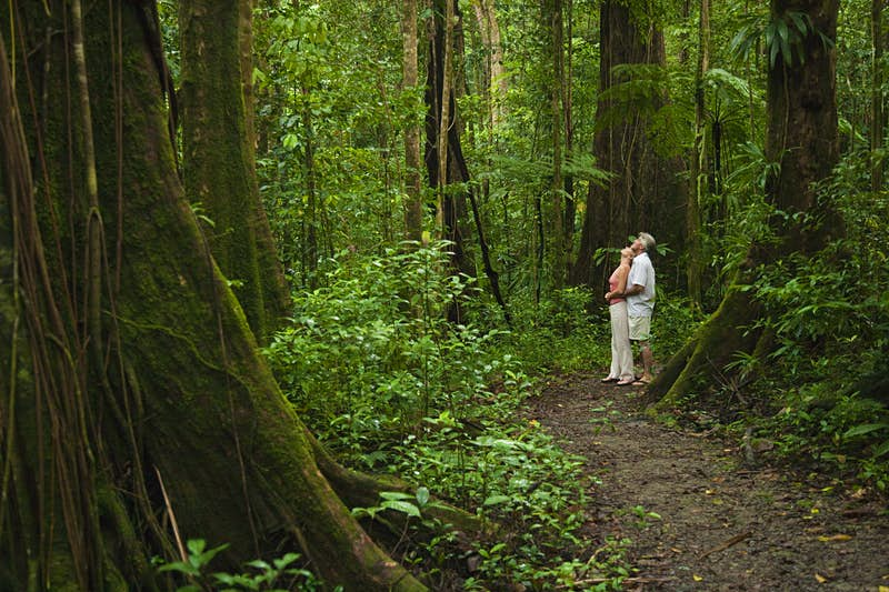 A couple looks up towards the canopy in dense rainforest. They are standing on a damp, earthen track, and are surrounded by huge trees and greenery.