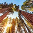 Sequoia and Kings Canyon National Parks are connected by Generals Hwy © iStock / Getty Images