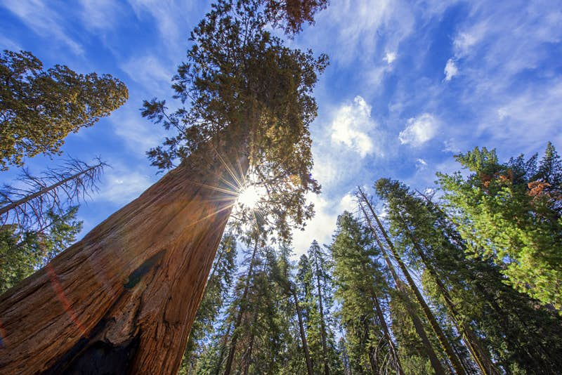World's largest private sequoia grove needs your help to open to the public
