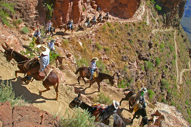 A caravan of mules carry visitors up the switchback trails on the sides of the Grand Canyon