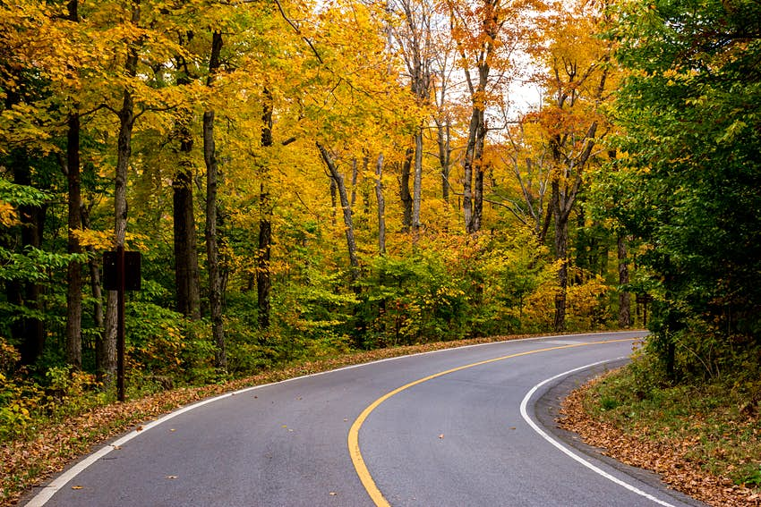 Yellow leaves surround a winding road in Massacusetts; New England fall foliage road trip