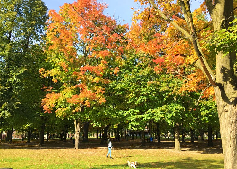 A person walks their dog through High Park in Toronto as the leaves on the trees turn orange; Free things to do in Toronto