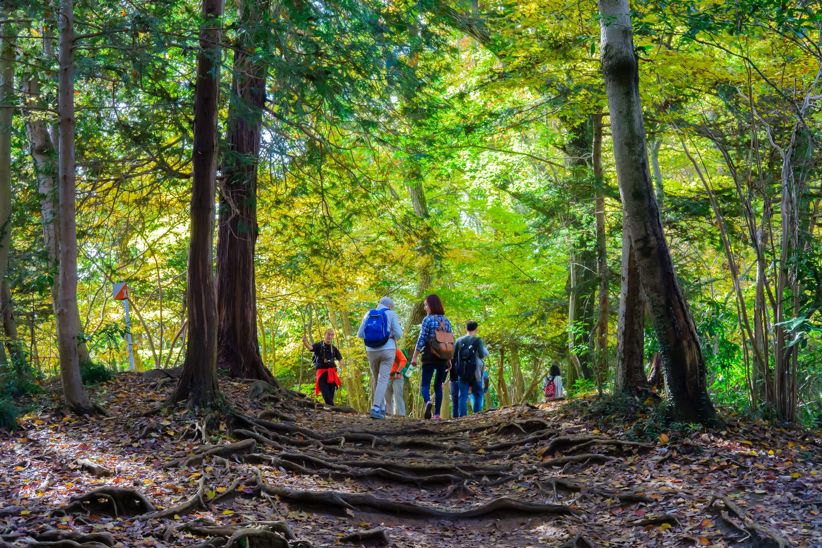 Self-reflection not selfies: why Tokyo's Mt Takao trek is a perfect complement to Mt Fuji