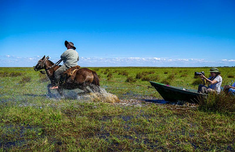 A man on horseback pulls a canoe through the Iberá wetlands. Northeast Argentina.