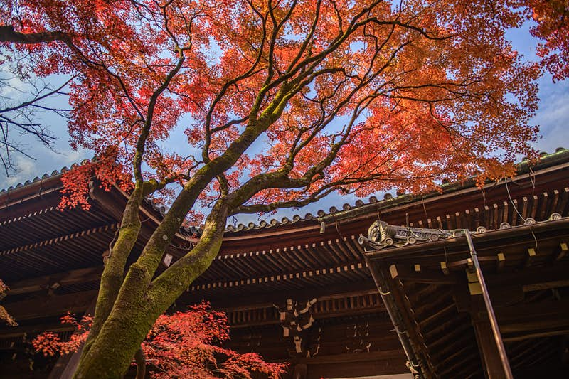 Red, orange and gold leaves are seen against the roof of a traditional pagoda structure in Japan