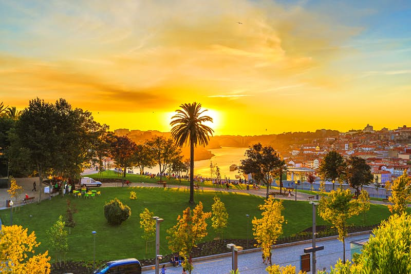 A brilliant golden sun - hidden behind the fronts of a towering palm tree - sinks towards the horizon and paints the lower portion of the sky a vibrant yellow; whispy clouds still the upper portion of the blue sky. People gather on benches at the bottom of a grassy slope to watch the sunset and the River Douro below.