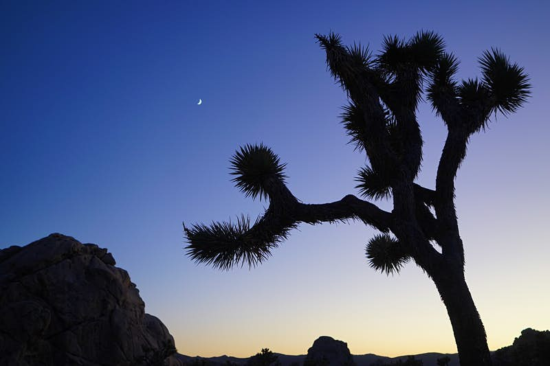 Joshua Tree National Park is turning 25: here's how to celebrate