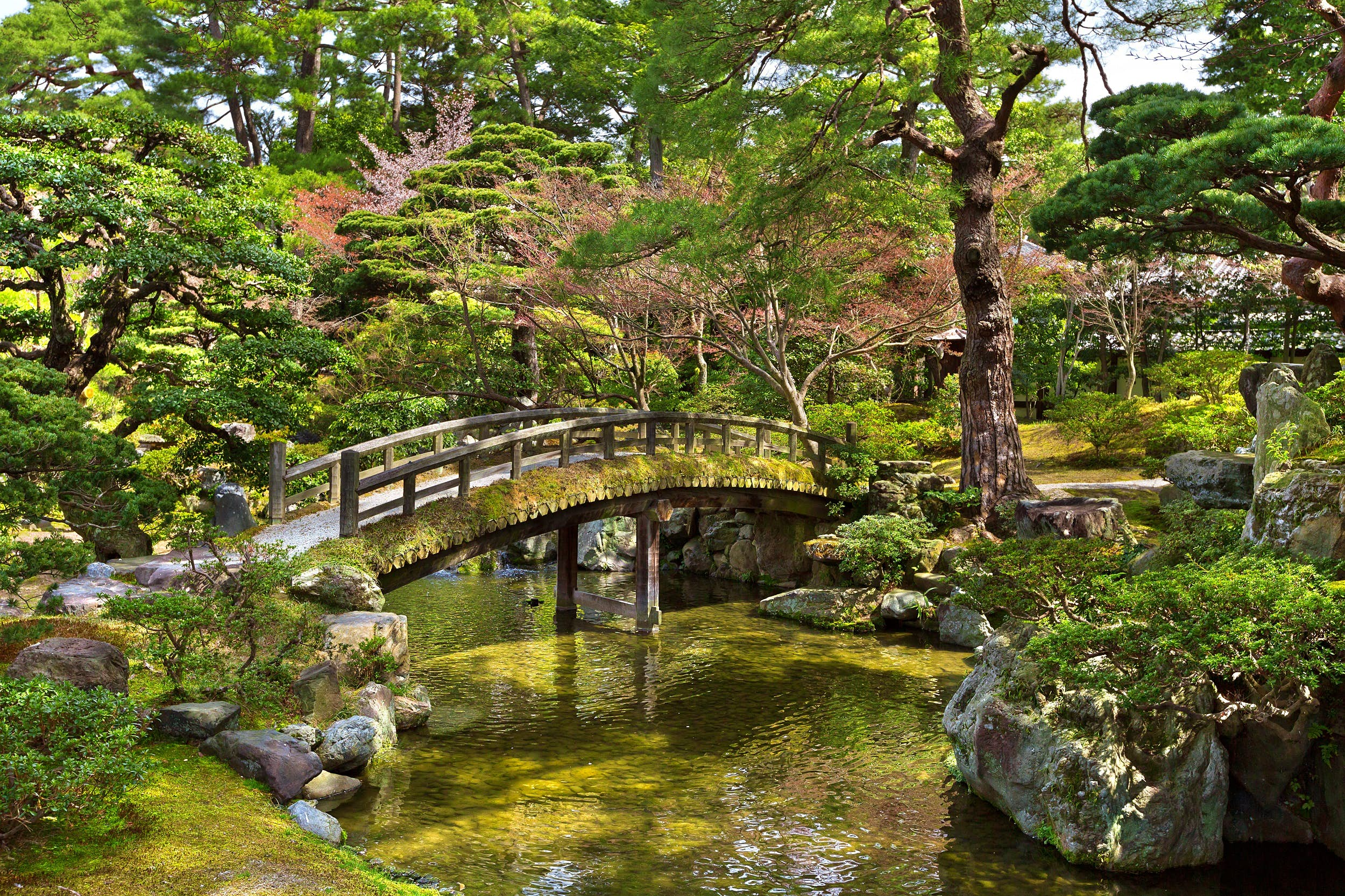 Beautiful Japanese garden in the Kyoto Imperial Palace, Japan; a wooden bridge crosses a small pond that is surrounded by rock outcrops, moss and trees.