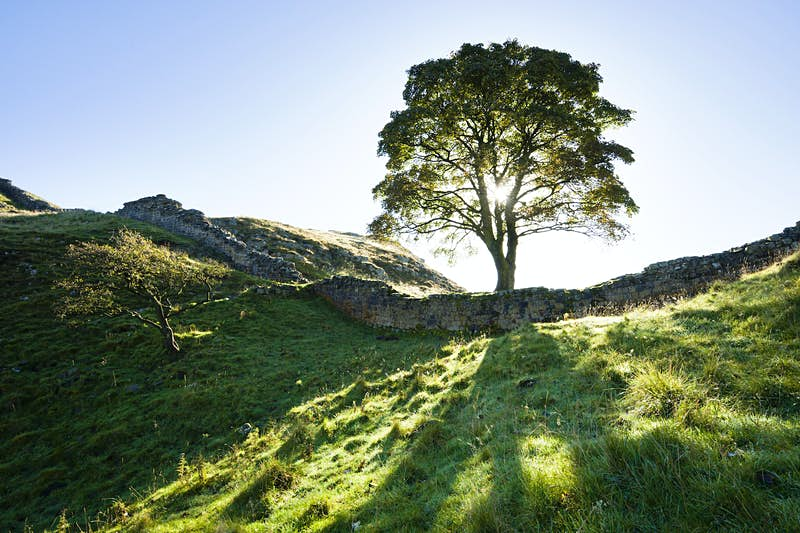 Hadrian's Wall at Sycamore Gap, the sunlight shining through a tree and breaking up shadows on the hills and  grass