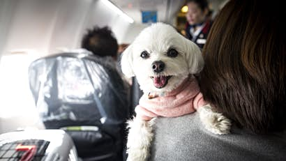 How do your fellow passengers really feel about animals on airplanes?