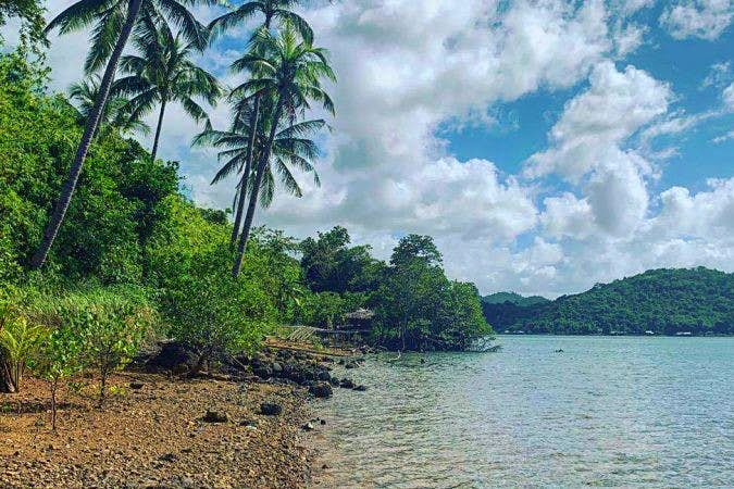 An island with palm trees, a rocky beach and lots of green bushes.