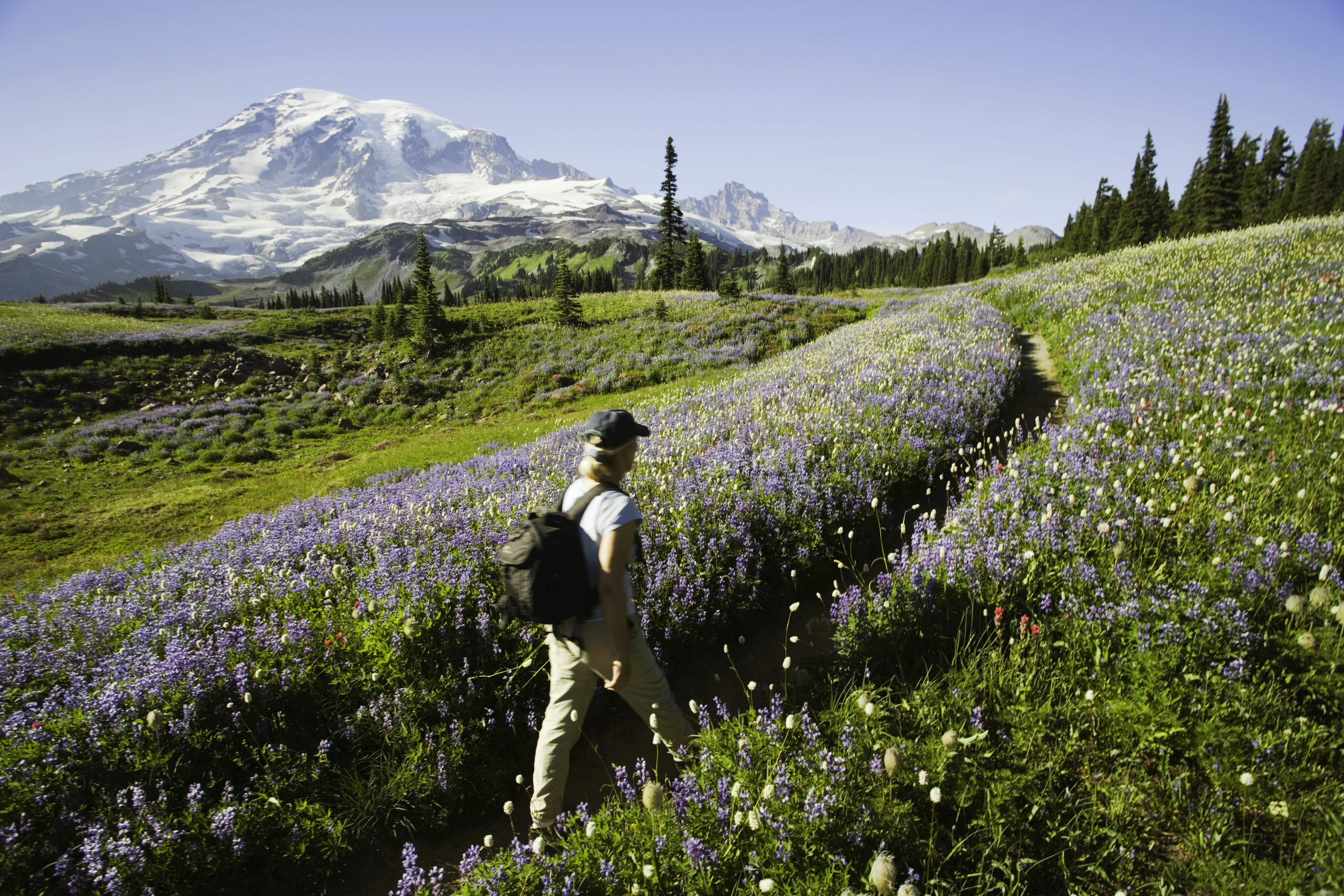 Advocates are pushing for air-tour management plans to regulate the commercial operators who fly over America's national parks, including Mount Rainier, in droves. Image: Rene Frederic/Getty Images