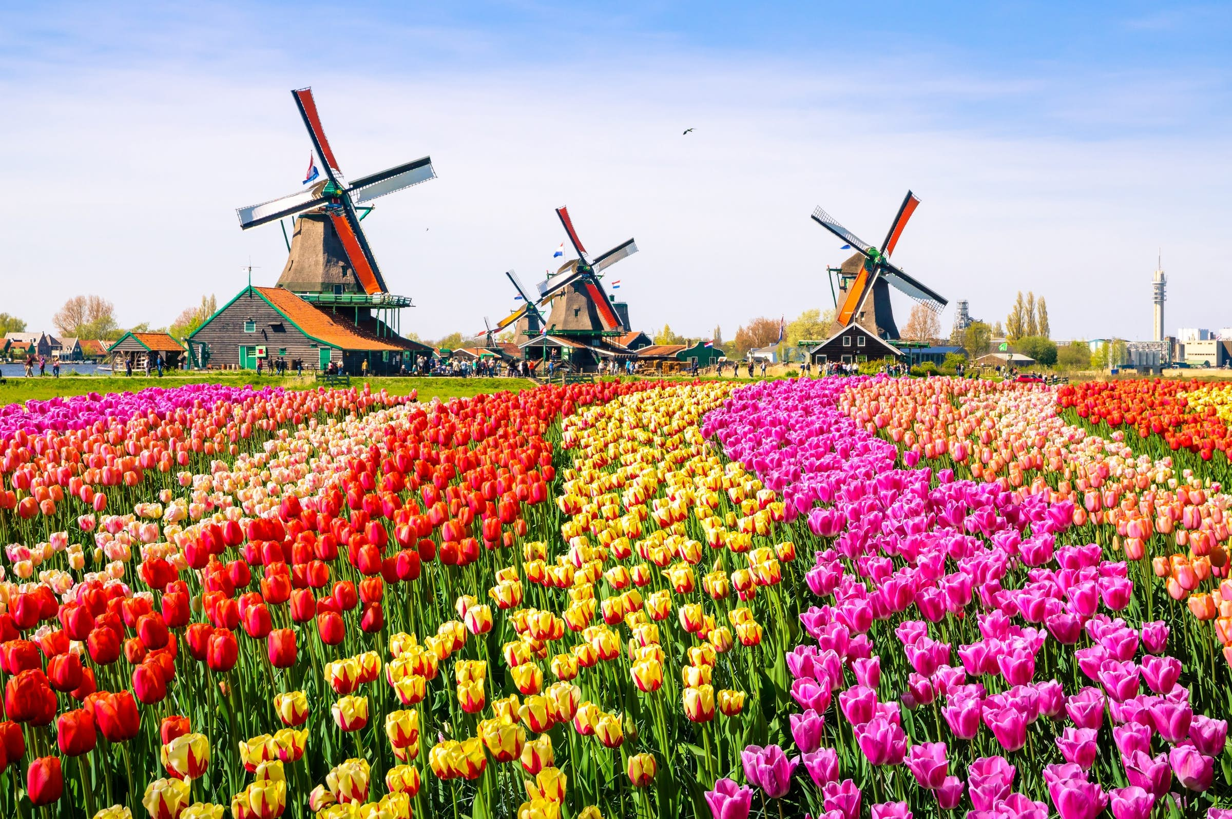 """The Netherlands sheds its """"Holland"""" nickname in the new year - Lonely Planet"""