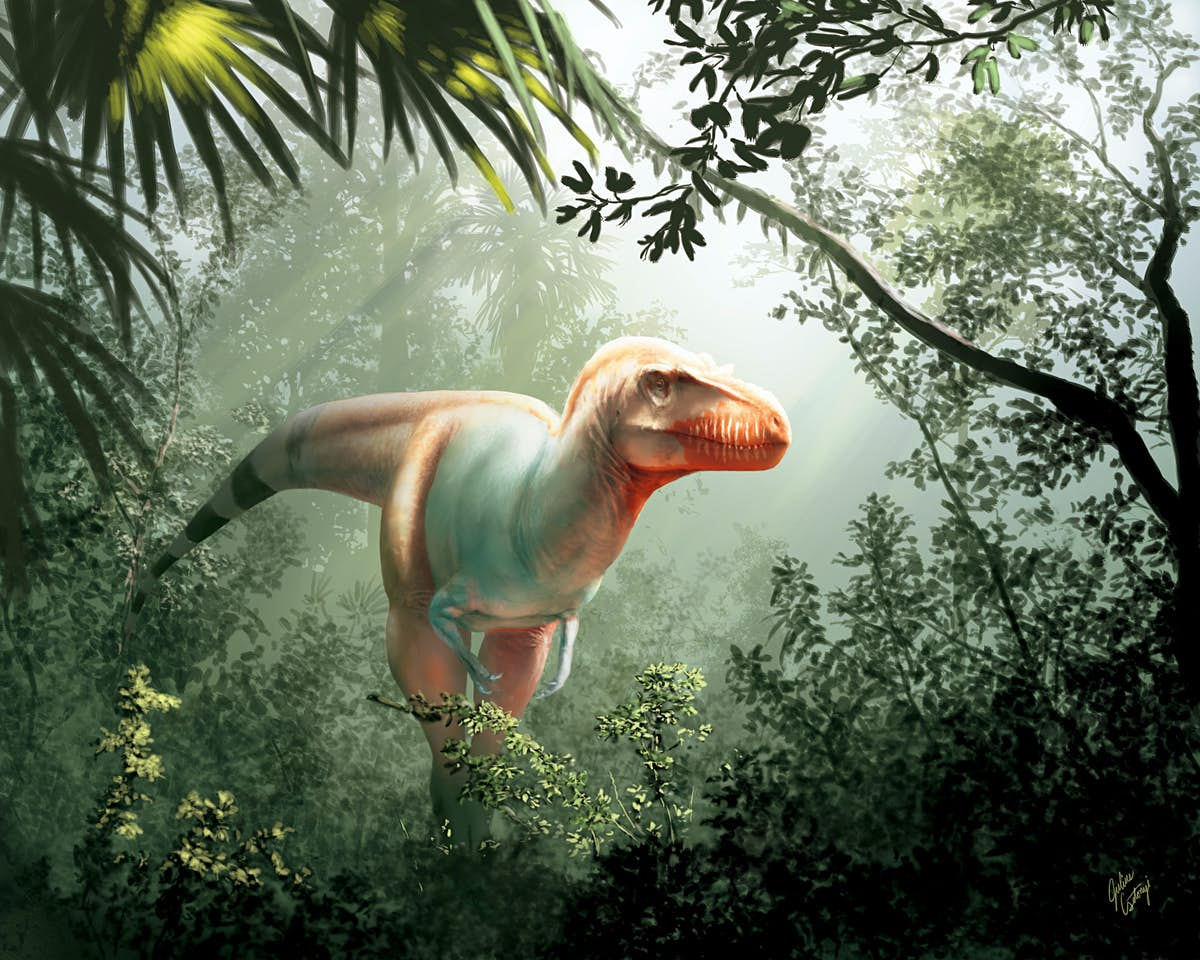 New tyrannosaur has been discovered in Canada