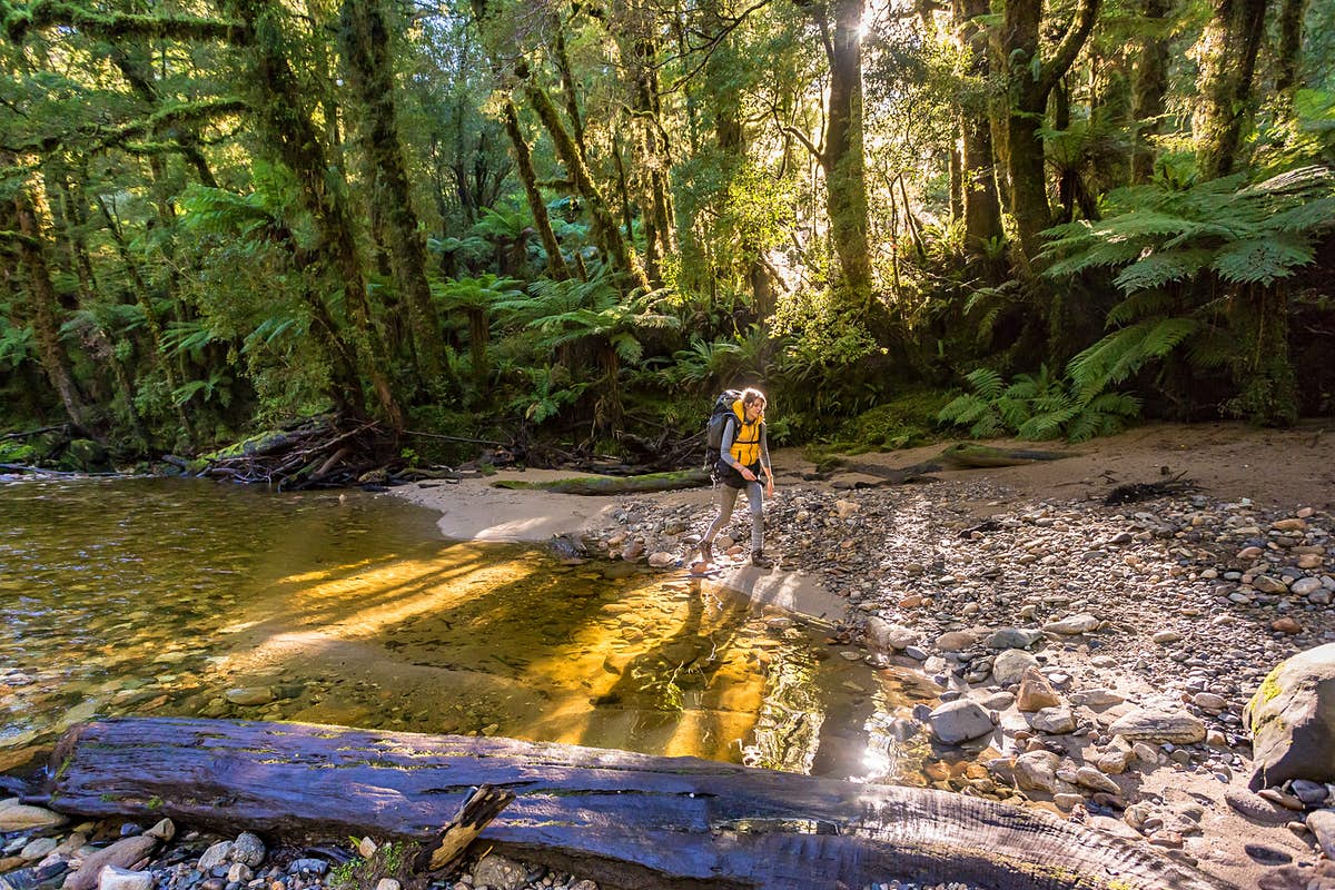 New Zealand's 10th Great Walk, the Paparoa Track, has opened - Lonely Planet