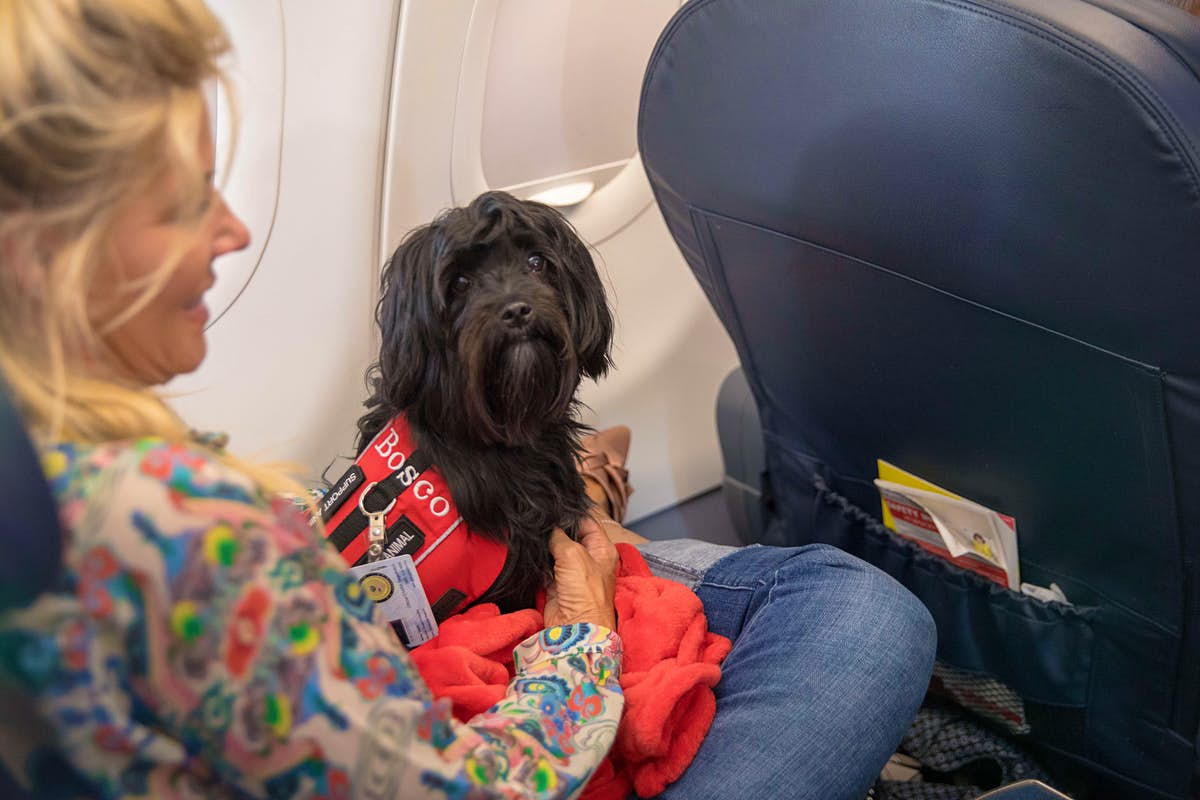 New rules could see emotional support animals banned from flights