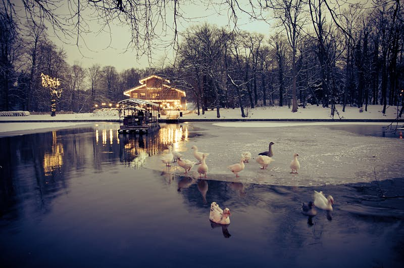 White ducks stand on a frozen section of a pond in front of the Chalet Robinson covered in snow. The buildings and boat dock and one tree are lit with the warm yellow glow of Christmas lights