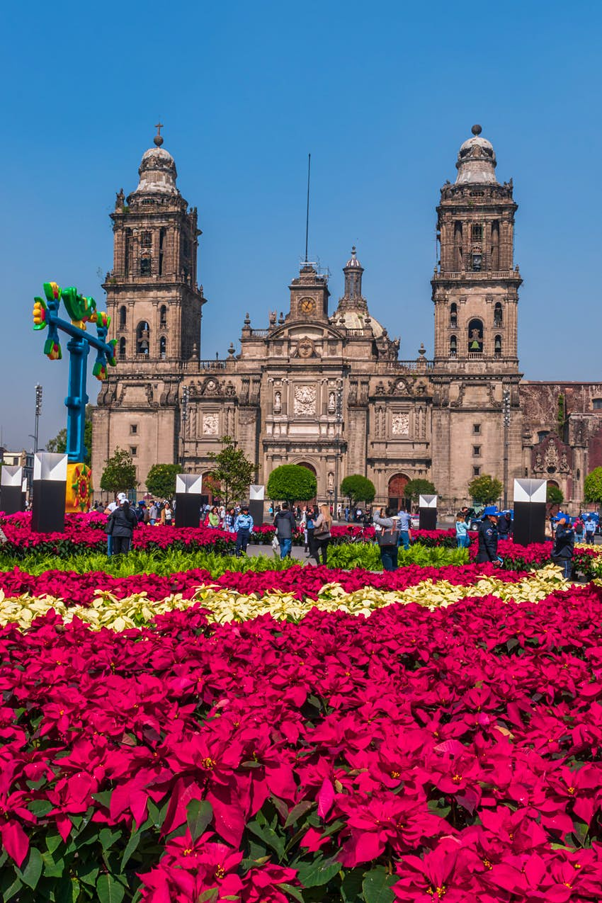 Famous Mexican cathedral surrounded by poinsettias on a clear day.