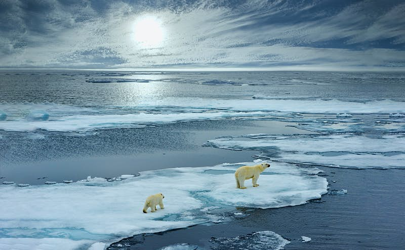 A polar bear and cub walk on ice floe in Norwegian arctic waters in Svalbard