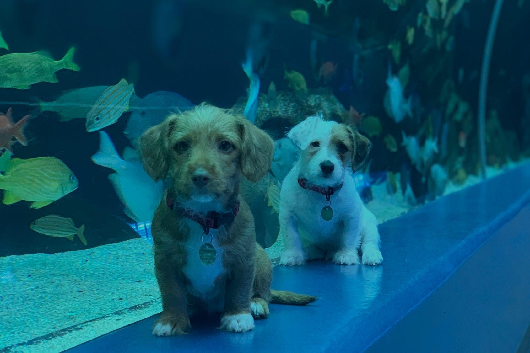 These puppies went on an underwater adventure at the Georgia Aquarium