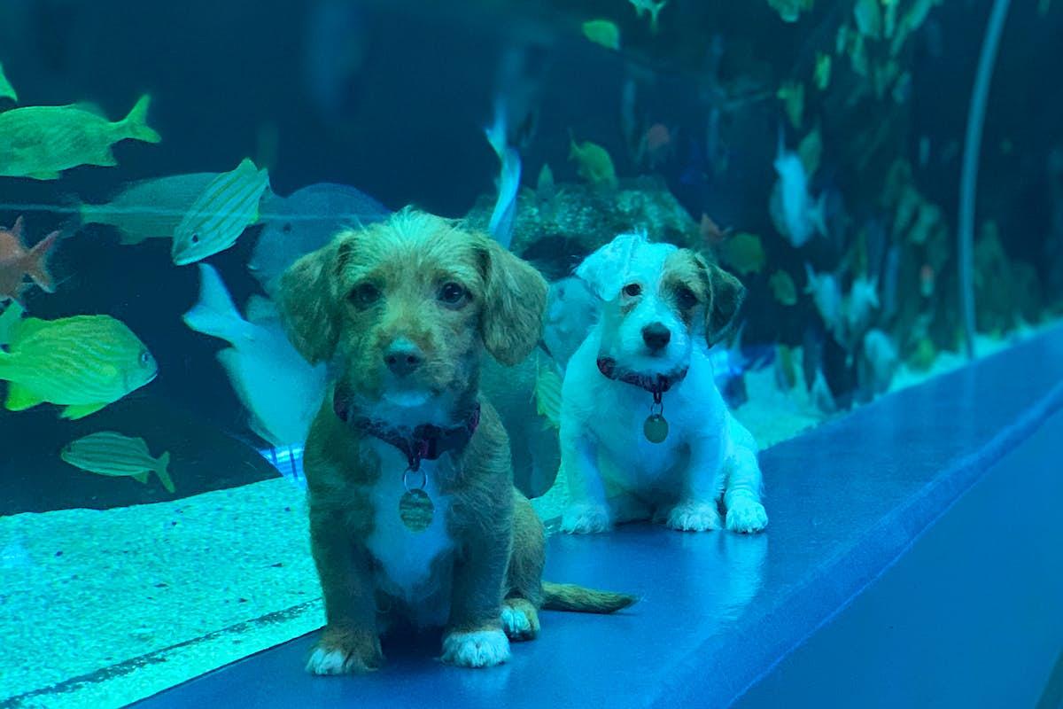 These puppies explored the Georgia Aquarium - Lonely Planet