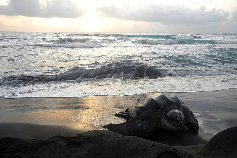 How your vacation can help save sea turtles in the Caribbean
