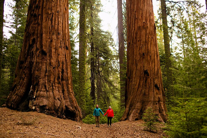 Sequoia National Park; National Parks Overview