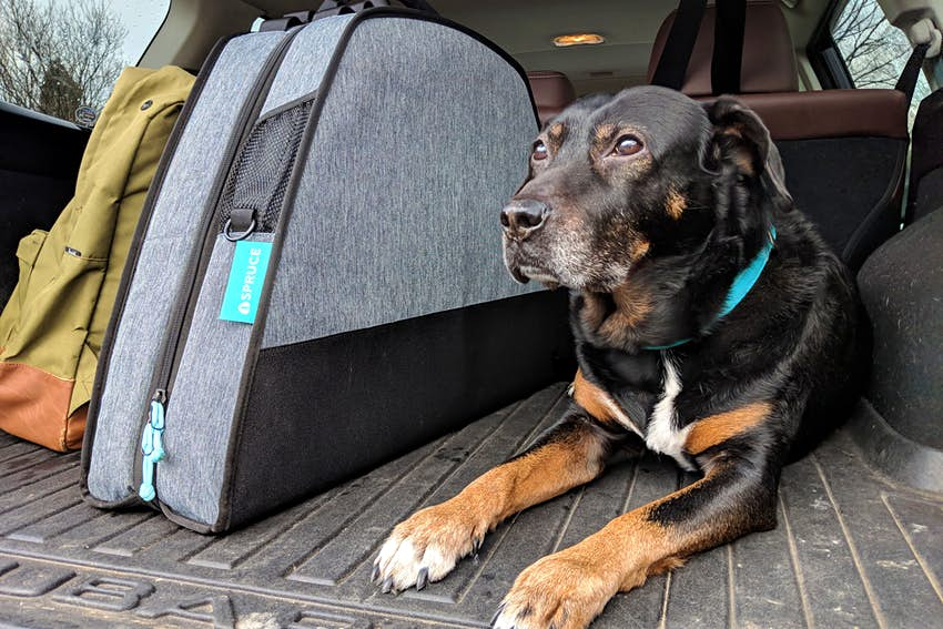 These Packable Dog Beds Fold Up Into A Suitcase For Dogs Lonely Planet