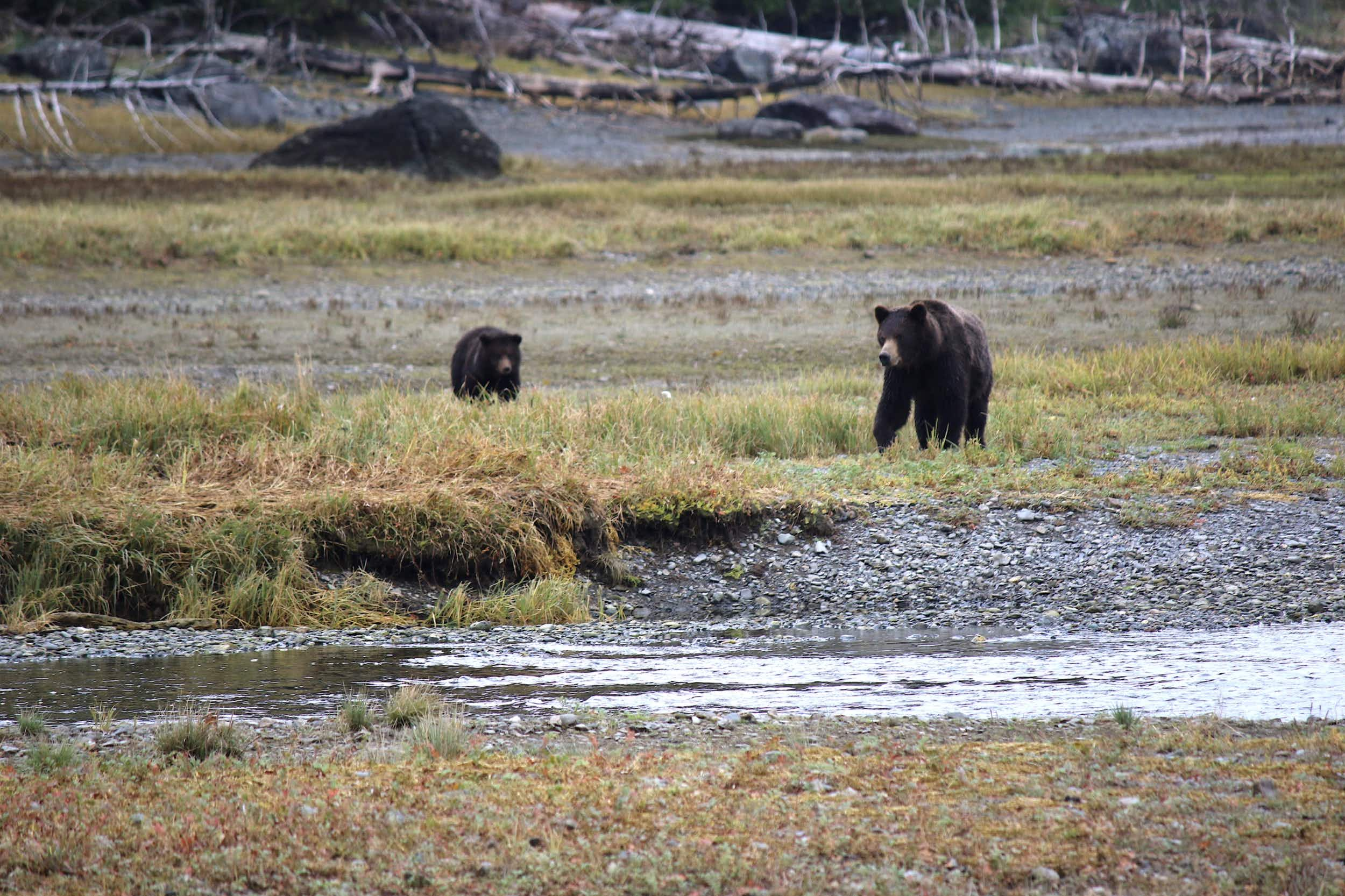Bear watching at Tongass National Forest is one of the United States' greatest outdoor experiences © Mike MacEacheran / Lonely Planet