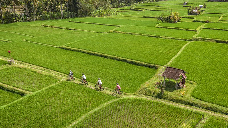 How about doing a jungle biathlon while you relax in Bali?