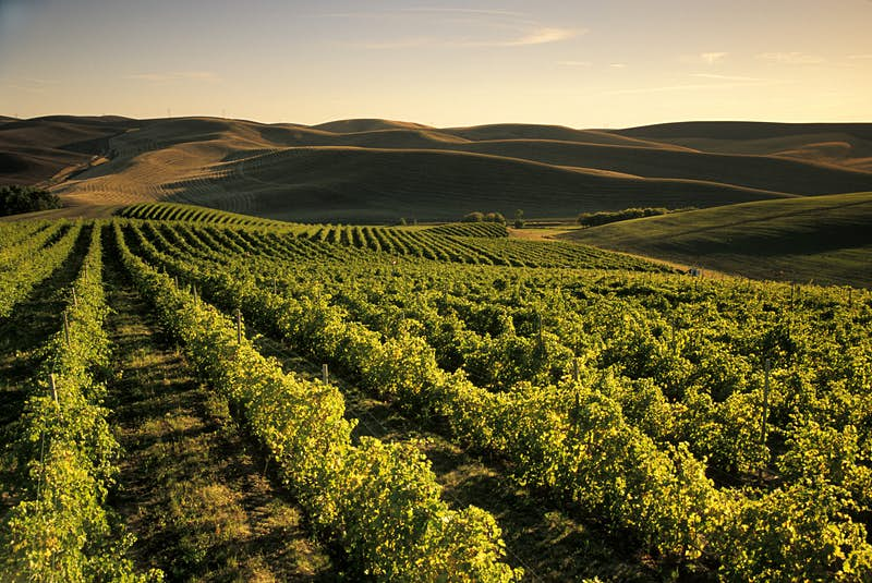 Walla Walla wine country is one of the best kept secrets of the Pacific Northwest