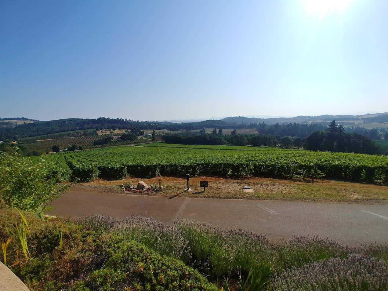 The best tasting rooms in Oregon's Willamette Valley wine country