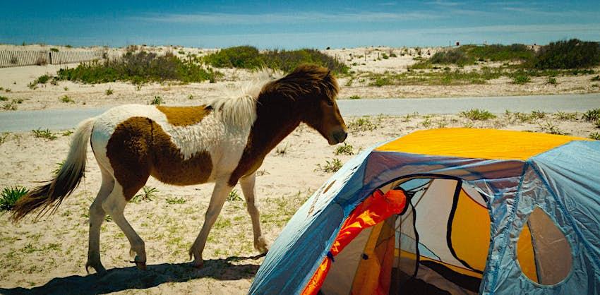 Wild horse on the beach at Assateague National Seashore, Maryland