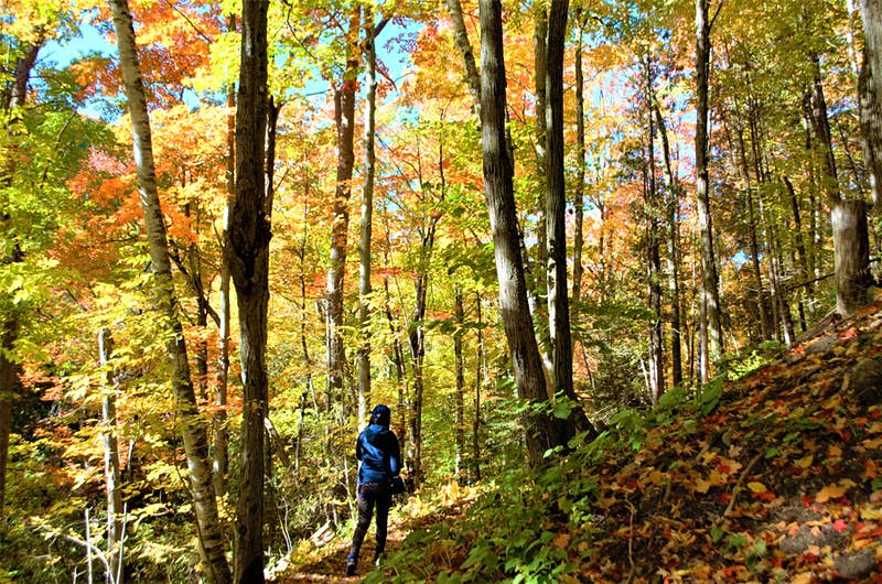 A woman walks along a narrow hiking trail, covered in fallen leaves and surrounded by high trees with fall foliage