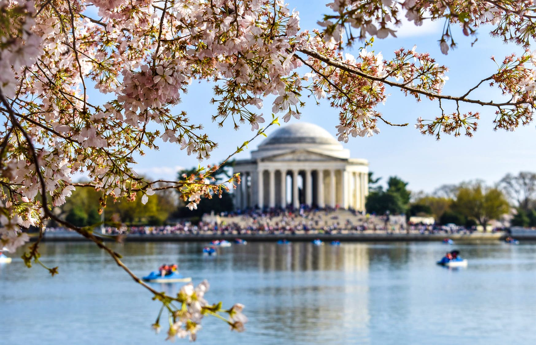 The top 10 places to see cherry blossoms in the US
